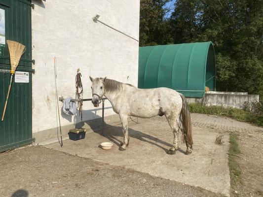 Aktivstall am Holzgarten - horse+ Nutzer