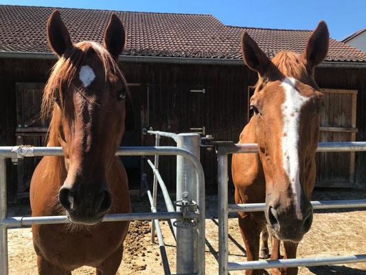 Pferde Aktivstall am Holzgarten