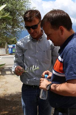 Sebastian in Kefala bei der Bauernkooperative (Kalamata Oliven)