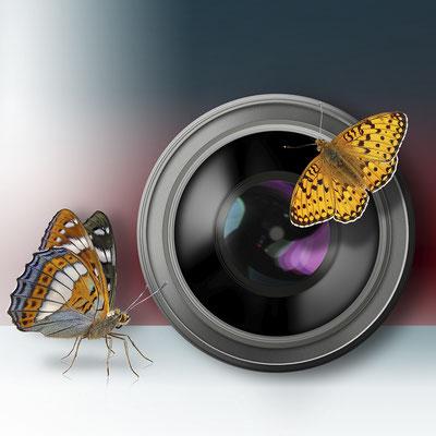 objektiv-schmetterlinge-grafik-thielen-grafikdesign-logodesign-webdesign-bilddesign