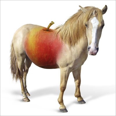 pferd-pferdeapfel-grafik-thielen-grafikdesign-logodesign-webdesign-bilddesign