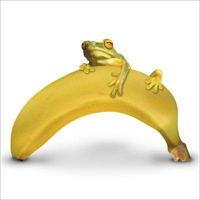 frosch-banane-klettern-grafik-thielen-grafikdesign-logodesign-webdesign-bilddesign