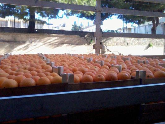 Casse di arance siciliane
