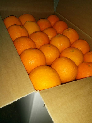 cartone arance dop