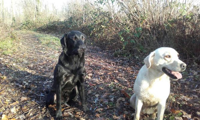 Danny und Ivy mit 1.5 Jahren auf der Jagd in Belgien