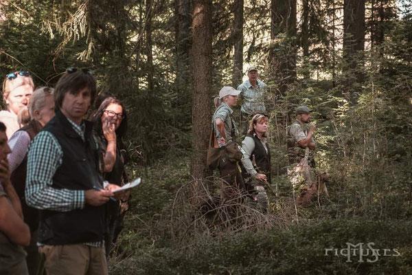 3. Runde im Wald