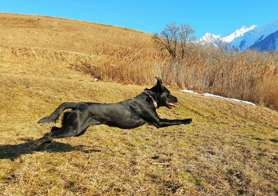 Cooper mit 1.5 Jahren beim Training