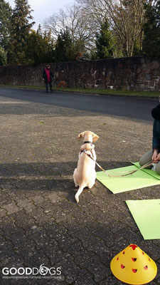 Hundeschule GOOD DOGS - Heusenstamm - Rodgau - Welpenerziehung - Welpenspiel - Ruhe