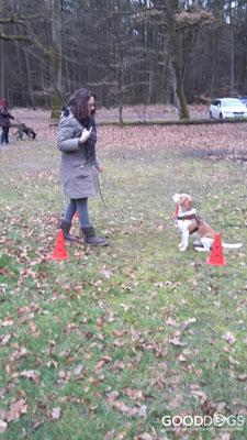 GOOD DOGS Hundeschule - Junghunde Erziehung Bleib-Übung