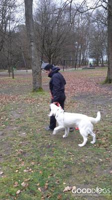 GOOD DOGS Hundeschule - Junghunde Erziehung Leinenführigkeit