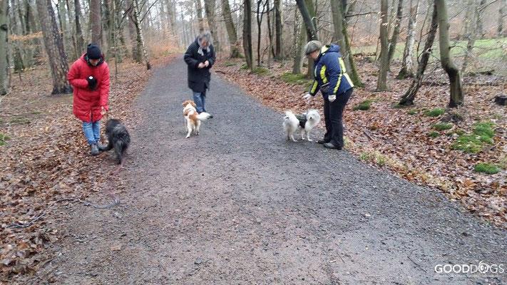 Hundeschule GOOD DOGS - Erziehung - Beschäftigung - Winterspaziergänge - Spaß mit dem Hund - Erziehung
