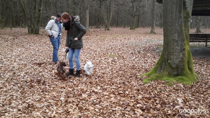 GOOD DOGS Hundeschule - Welpe Erziehung Spiel