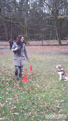 GOOD DOGS Hundeschule - Junghunde Erziehung warten