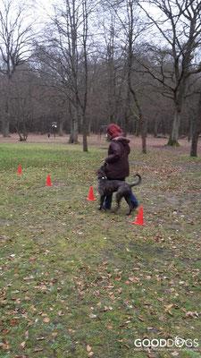 GOOD DOGS Hundeschule - Junghunde Erziehung Leinenführigkeit Slalom