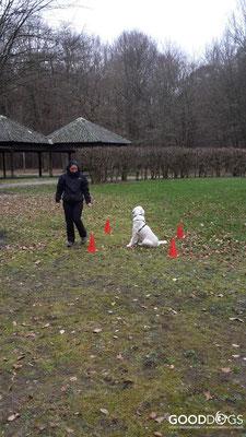 GOOD DOGS Hundeschule - Junghunde Erziehung Warteübung