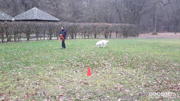 GOOD DOGS Hundeschule - Junghunde Erziehung Schleppleine