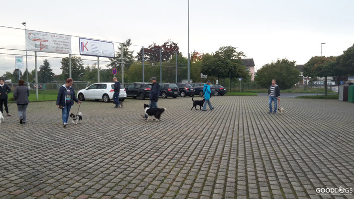 Gruppenübung Hundebegegnungen