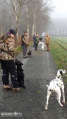 Als erstes gibt es wieder Übungen, damit sich die Hunde kennenlernen können