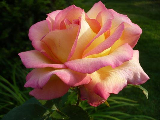 Rose Jean Piat