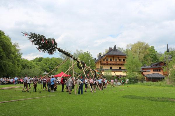 Maibaumaufstellen in St. Jakob