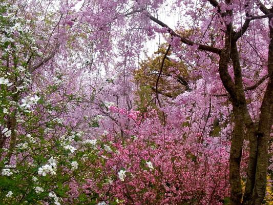 「しだれ桜」「しだれ梅」「利休梅」