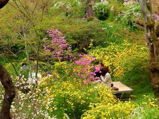 苑内には床几台が置かれ、ゆったりと寛げます。