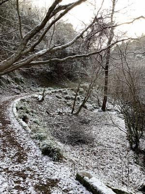 「初雪」2/6裏山(比叡山登り口)