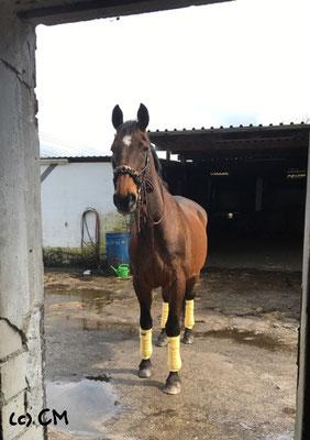 Blick aus der Sattelkammer (mit meinem Pferd, klar)
