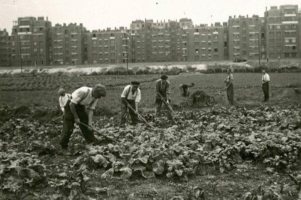 1943 - Boulevard Carnot 12e, les cultures légumières