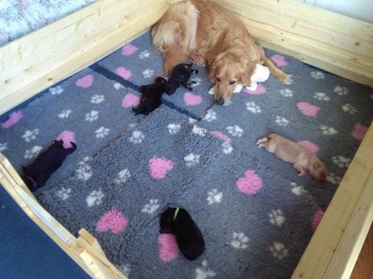 schlafen in der Wurfkiste - Platz haben sie genug
