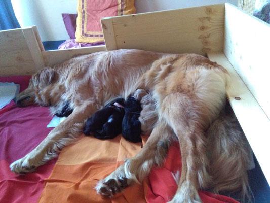 Alba hat fertig - 5 stramme kleine Hovis sind heute geboren