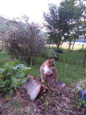 Paulinchen, meine Lieblingskatze, hat mich in den Garten begleitet