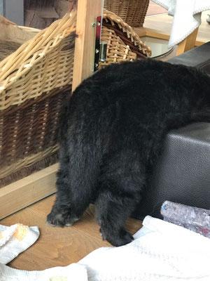 oder vielleicht in ein Gehege mit Nasenbären eingegliedert werden - mit denen scheint er auch verwandt zu sein