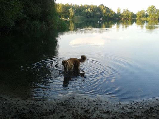 und so schön kann man baden im See
