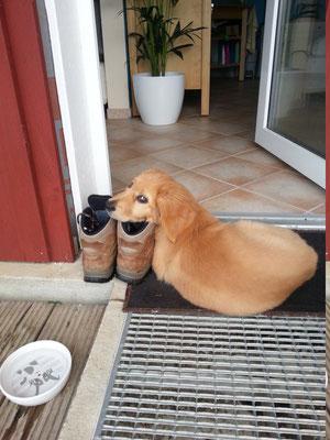 besonders auf Schuhe, damit sie nicht weg laufen