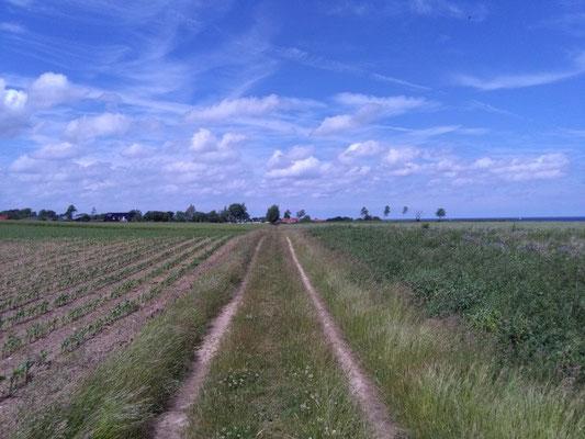 Landschaft an der Ostsee