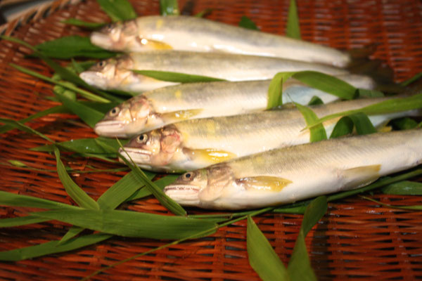 fish of the season, Ayu fish