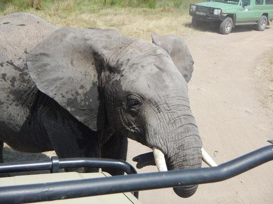 Elefant untersucht das Auto / Elephant examines the car