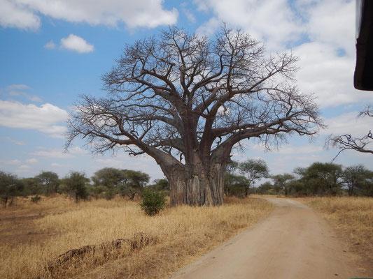 Baobab im Tarangire NP / Baobab in the Tarangire NP