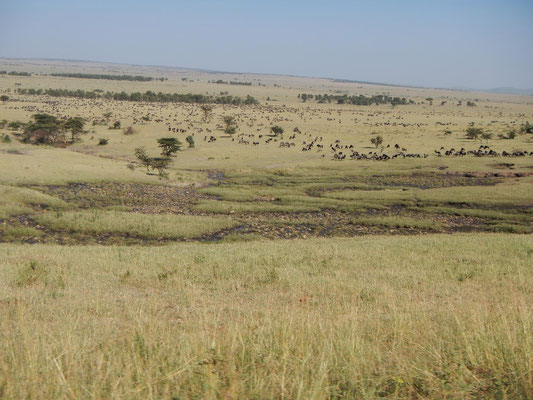 Blick in Weite der Serengeti zur Migration / View into the expanse of serengeti for migration