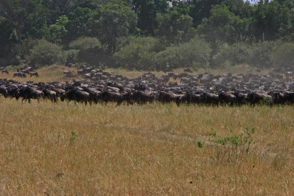 Migration der Gnus