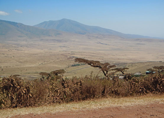 Ngorongoro Hochland / ngorongoro highlands