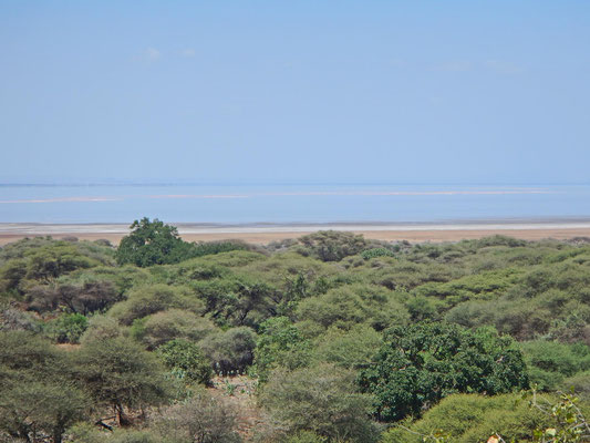 Blick auf den Lake Manyara / View of the Lake Manyara