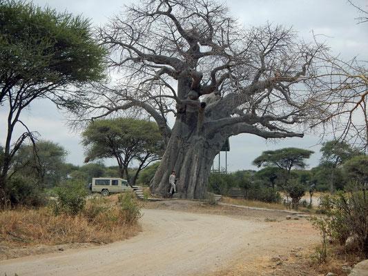 Eingang Tarangire NP mit Baobab / Entry Tarangire NP with baobab