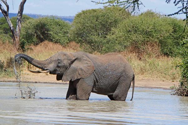 Elefantenbad im tarnagire NP / Elephant bath in Tarangire NP