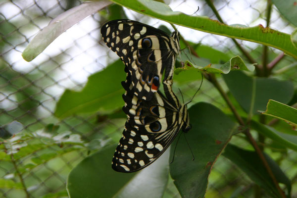 Schmetterlingsfarm / butterfly farm
