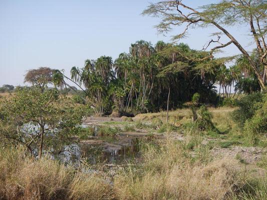 Oase in der Serengeti / Oase in the serengeti