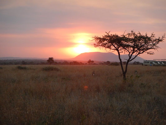 Sonnenuntergang in der Serengeti / Sunset in the serengeti