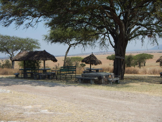 Picknickplatz in der Serengeti / picnic area in the serengeti