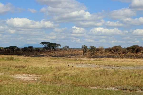 Die Weite des Tarangire NP / The width of the Tarangire NP